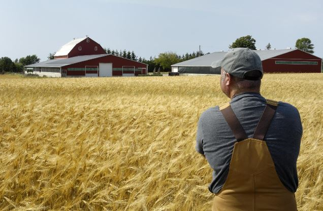 Как получить в аренду землю под фермерское хозяйство?